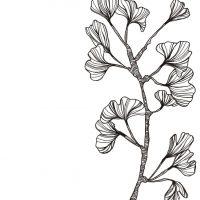 פרח גינקו